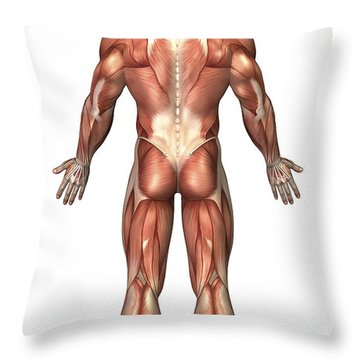 Anatomy Of Male Muscular System, Back Throw Pillow by Stocktrek Images