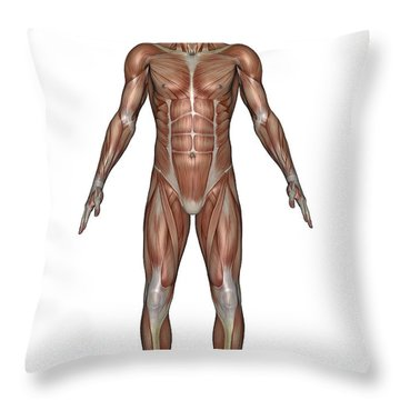 Anatomy Of Male Muscular System, Front Throw Pillow by Elena Duvernay