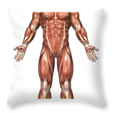 Anatomy Of Male Muscular System, Front Throw Pillow by Stocktrek Images