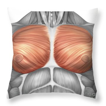 Anatomy Of Male Pectoral Muscles Throw Pillow by Stocktrek Images