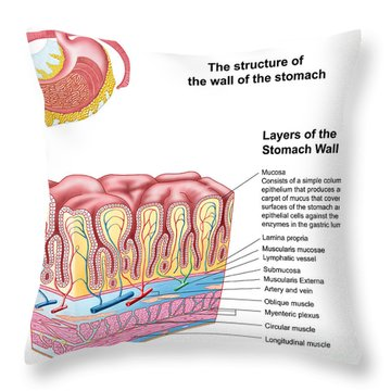 Anatomy Of The Structure And Layers Throw Pillow