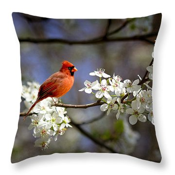 And A Carninal In A Pear Tree Throw Pillow