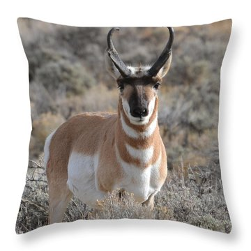 ...and The Antelope Play Throw Pillow