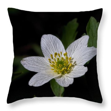 Anemone Nemorosa  By Leif Sohlman Throw Pillow