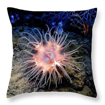 Throw Pillow featuring the photograph Anemone Sea Life Sea Ocean Water Underwater by Paul Fearn
