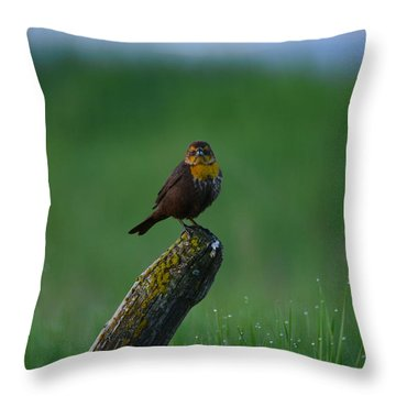 Angry Bird Throw Pillow