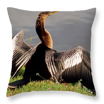 Anhinga Anhinga Anhinga Drying Plumage Throw Pillow