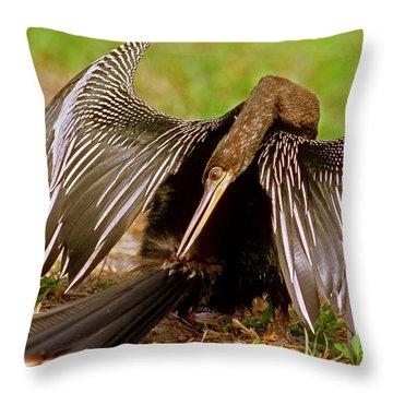 Anhinga Anhinga Anhinga Preening Throw Pillow by Millard H. Sharp