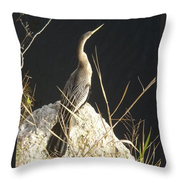 Throw Pillow featuring the photograph Anhinga by Robert Nickologianis