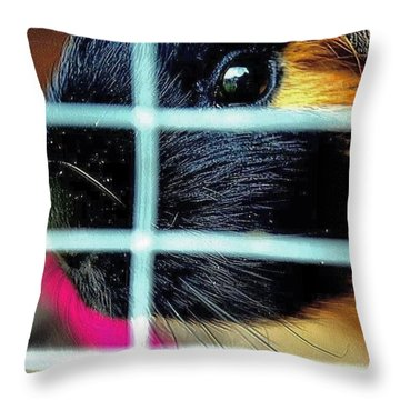 Guinea Pig Throw Pillow by Jason Michael Roust