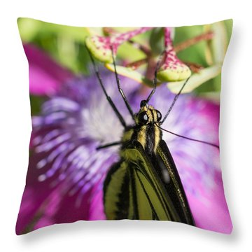Throw Pillow featuring the photograph Anise Swallowtail Butterfly And Passionflower by Priya Ghose