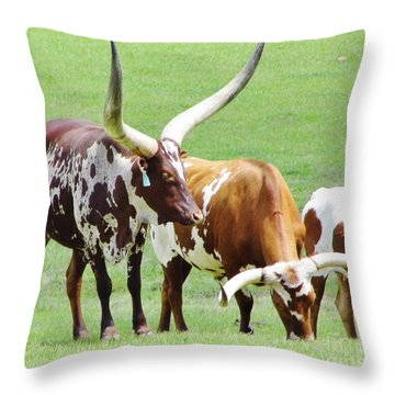 Ankole And Texas Longhorn Cattle Throw Pillow
