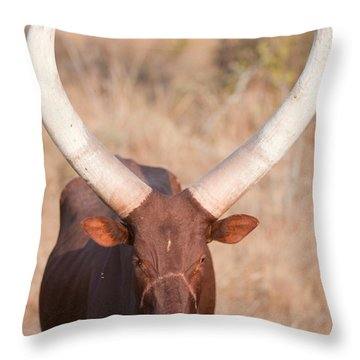 Ankole-watusi Cattle Standing Throw Pillow