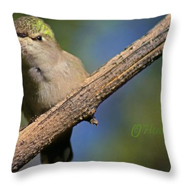 Anna's Hummingbird Baby Throw Pillow by Heather Coen
