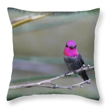 Anna's Hummingbird - Male Throw Pillow by Angela A Stanton