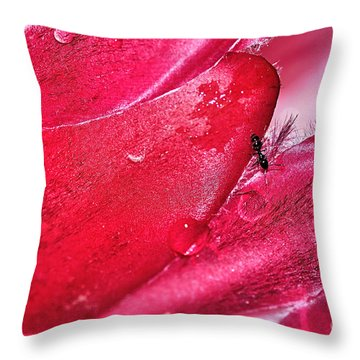 Ant Exploring Protea Petals Throw Pillow by Kaye Menner