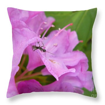 Ant On Flower Throw Pillow