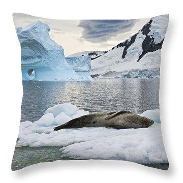 Antarctic Serenity... Throw Pillow