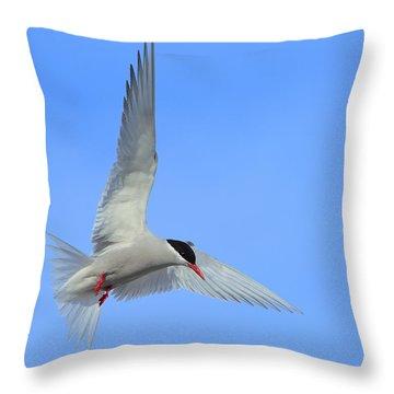 Antarctic Tern Throw Pillow by Tony Beck