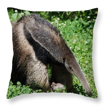 Anteater Throw Pillow by DejaVu Designs