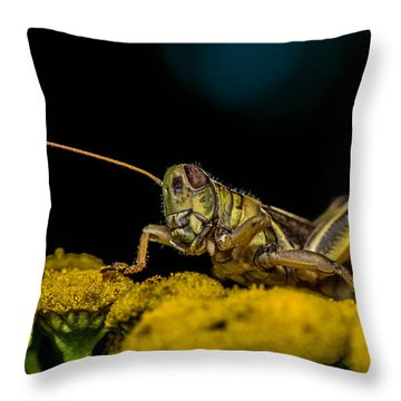 Antenna Down Throw Pillow by Paul Freidlund