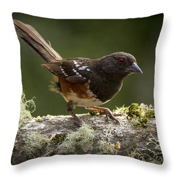 Anticipation Throw Pillow by Jean Noren