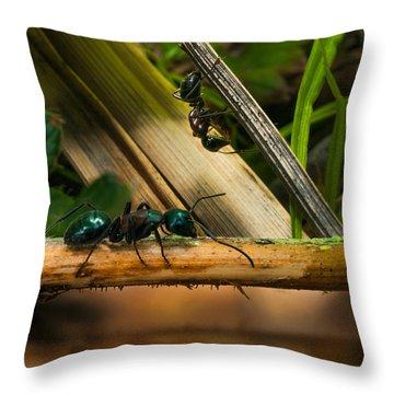 Ants Adventure 2 Throw Pillow by Bob Orsillo
