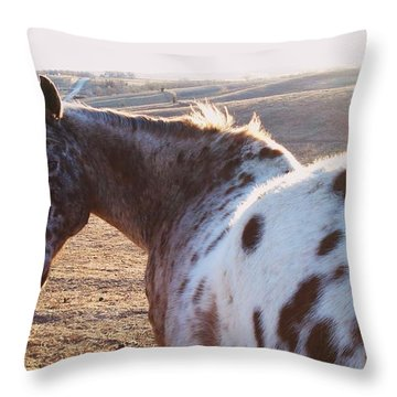 Appaloosa Gaze Throw Pillow