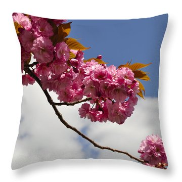 Apple Beauty Throw Pillow by Jim Brage
