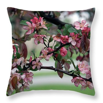Throw Pillow featuring the photograph Apple Blossom Time by Kay Novy