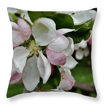 Apple Blossoms 2 Throw Pillow by VLee Watson