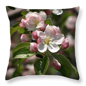 Throw Pillow featuring the photograph Apple Blossoms In Spring by Henry Kowalski