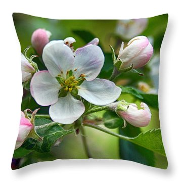 Apple Blossom And Buds Throw Pillow