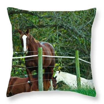 Apple Dreams Throw Pillow