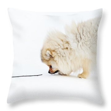 Apport Throw Pillow by Jenny Rainbow