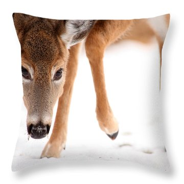 Approaching Throw Pillow by Karol Livote