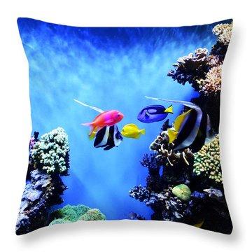 Aquarium 1 Throw Pillow by Barbara Snyder