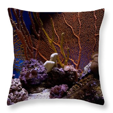 Throw Pillow featuring the photograph Aquarium Life by Ivete Basso Photography