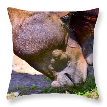 Arabian Horses Throw Pillow