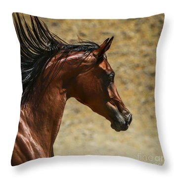 Bay Thoroughbred Throw Pillows