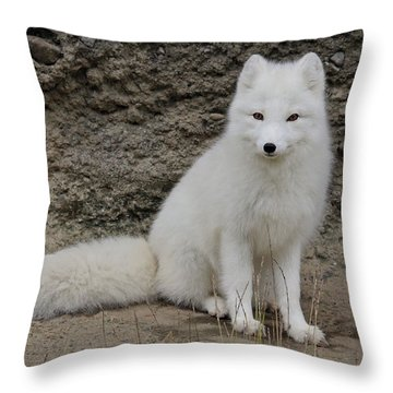 Arctic Fox Throw Pillow