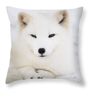 Arctic Fox Resting In The Snow Throw Pillow