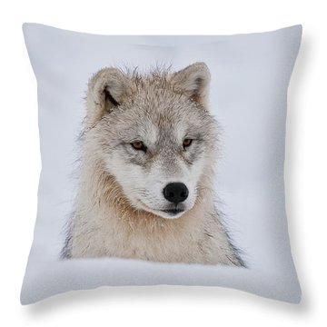 Arctic Pup In Snow Throw Pillow