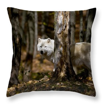 Throw Pillow featuring the photograph Arctic Wolf In Forest by Wolves Only