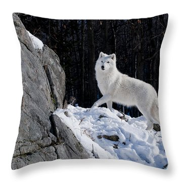 Throw Pillow featuring the photograph Arctic Wolf On Rock Cliff by Wolves Only