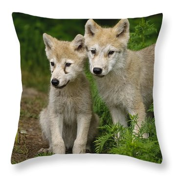 Arctic Wolf Puppies Throw Pillow