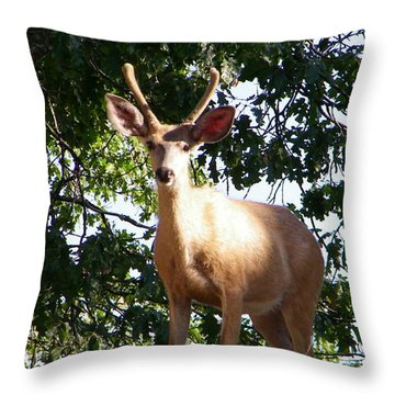 Are You A Friend Throw Pillow by Tom Mansfield