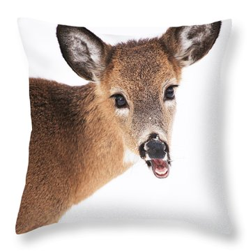 Are You Done Taking Pictures Throw Pillow by Karol Livote