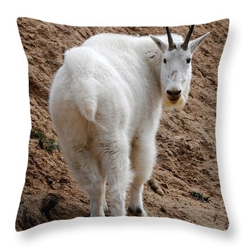 Are You Following Me Throw Pillow by Vivian Christopher