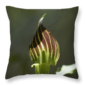 Throw Pillow featuring the photograph Arisaema Triphyllum Jack-in-the-pulpit by Rebecca Sherman